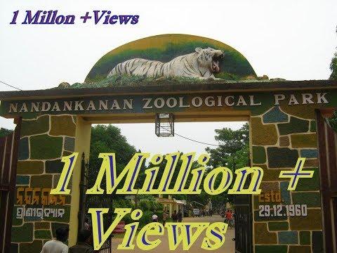 Nandankanan zoological park odisha | 2nd biggest zoo in India.