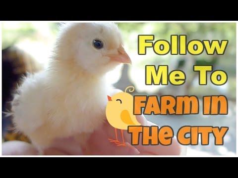 Follow Me To Farm In The City @ Seri Kembangan [Malaysia]