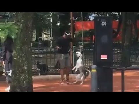 hijo-de-la-chingada-asfixia-a-perrito-en-parque-de-cdmx