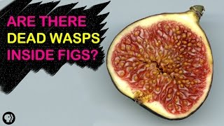 Are There Dead Wasps In Figs?