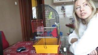 Приручение попугая  День 18. Уборка клетки не прирученного попугая