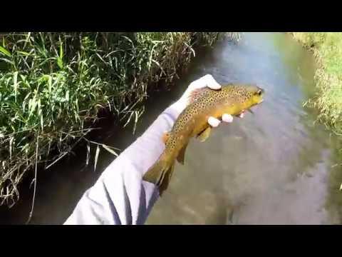 Driftless Hopper Fishing 2017