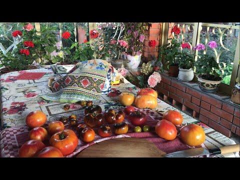 Семена томатов на 2019 / лучшие сорта / заказ семян томатов