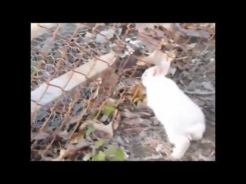 rabbits-pass-through-chain-link-fence-in-slow-motion