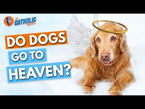 Episode 17: Do All Catholic Dogs Go To Heaven?   The Catholic Talk Show