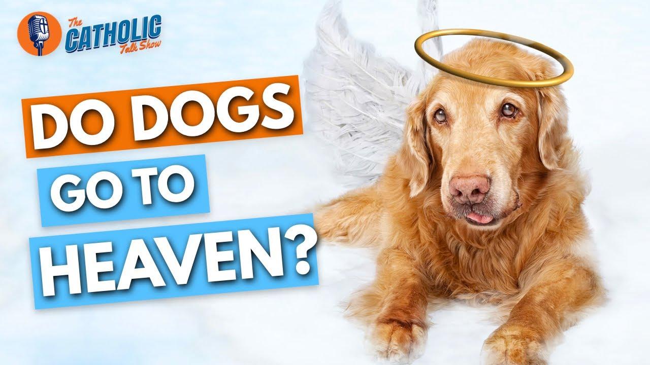 Do All Catholic Dogs Go To Heaven? | The Catholic Talk Show