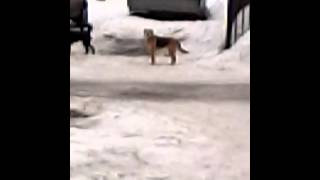 Собаки занимаются делом