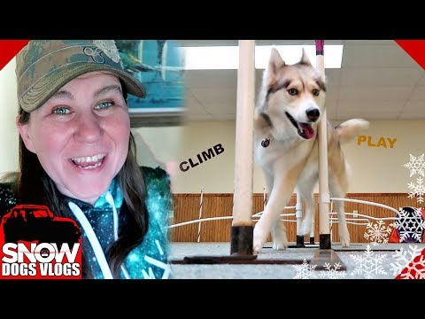 Shelby Can Weave   Husky Does Agility