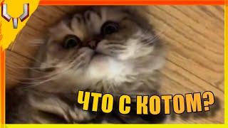 Что с котом? | Приколы из вк, тик тока и ютуба | Приколы #1