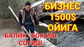 Балик,  Бок,иш Сотиш Бизнеси 1500$ Даромад