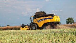 Żniwa 2019 - Rzepak - New Holland CX5090