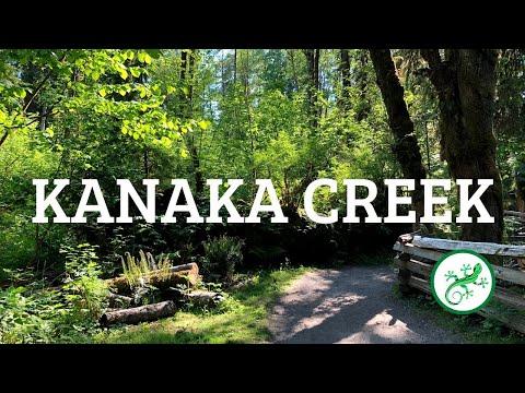 Kanaka Creek Regional Park's Cliff Falls Canyon Trail, Maple Ridge, BC | PerfectDayToPlay TV