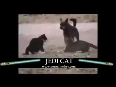 flea poop on cats