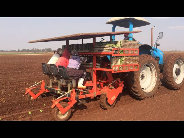 BABY COMPACT 3 ROWS PLANTER SOUTH AFRICA