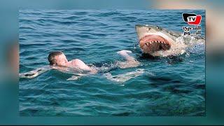 محافظ السويس يرأس اللجنة البحثية لدراسة هجوم «القرش» علي «السويس»
