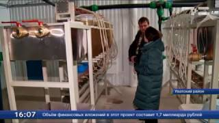 В Увате впервые занялись выращиванием икринок пеляди