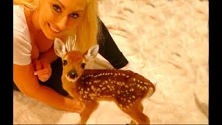 Dixie my Baby Deer