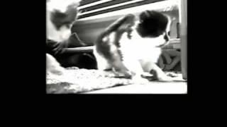 Global Unity Against Animal Crush Video