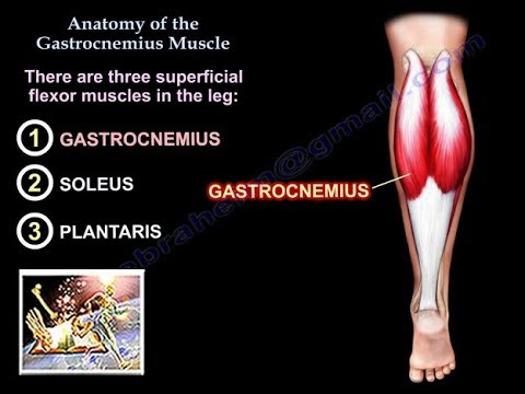 anatomy-of-the-gastrocnemius-muscle---everything-you-need-to-know---dr.-nabil-ebraheim