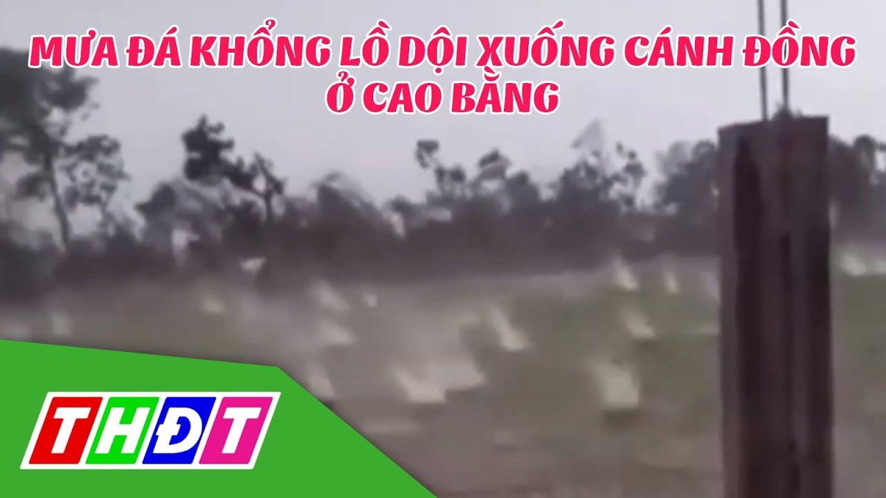 Cao Bằng: Mưa đá khổng lồ dội xuống cánh đồng | THDT