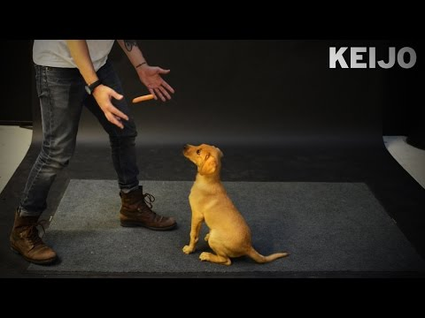 How Dogs React to Levitating Wiener