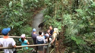 Cassowary at the Daintree Discovery Centre
