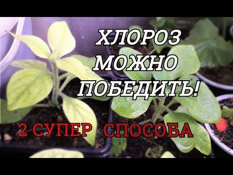 Как лечить хлороз растений