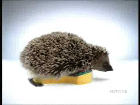 Spontex 'Hedgehog' TV Commercial