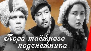 Download Пора таежного подснежника (1958) фильм Mp3 and Videos