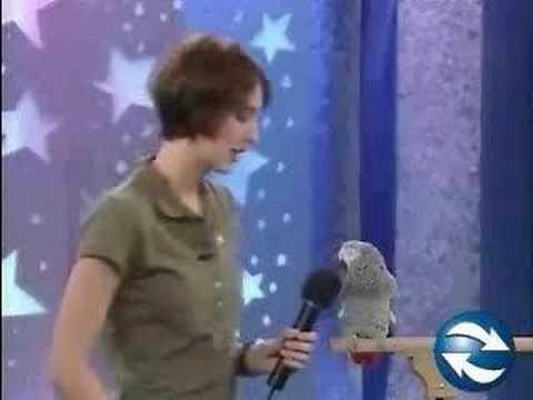 Bird speaking comically