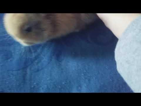 Mijn baby konijntje