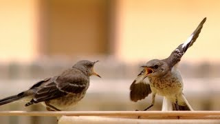 Prepare yourself TO LAUGH TILL YOU CRY- Funny TALKING BIRDS compilation