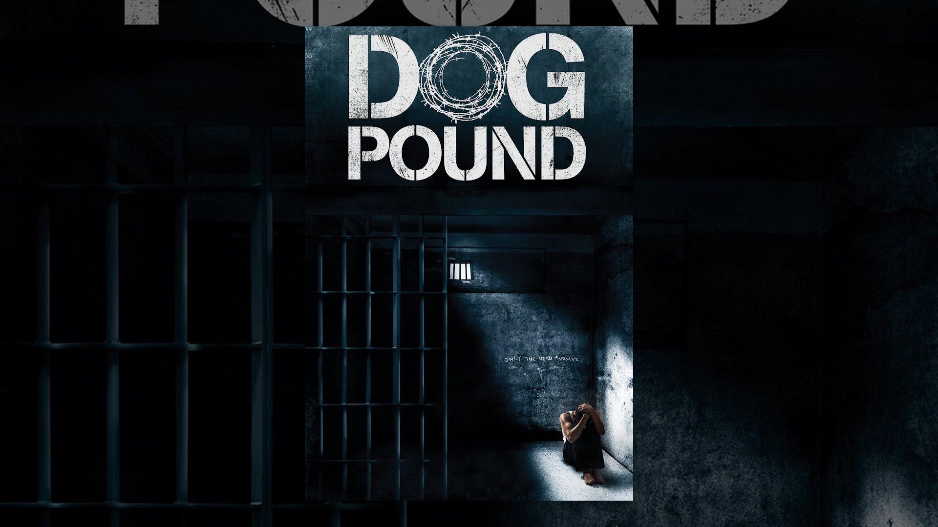 Kelly Dog Shelter - YouTube