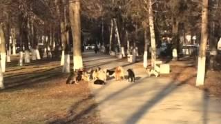 Бродячие собаки в Армавире