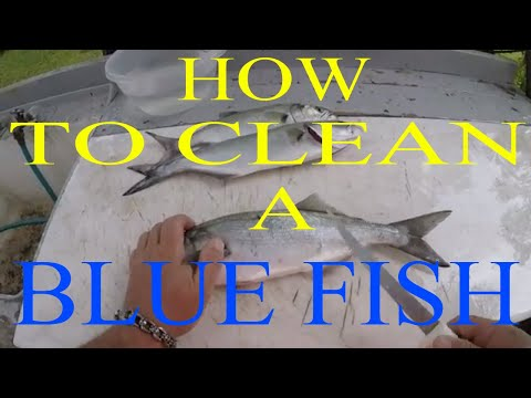 HOW TO CLEAN A BLUE FISH