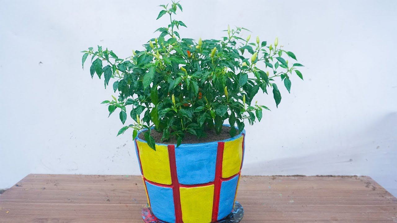 Make potted plants and decorate them beautifully with cement sand and gravel