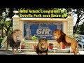 देखे... कैसे एक जंगली बब्बर शेर घुस गया देवलिया पार्क में | Wild Asiatic Lion Enters In Develia Park