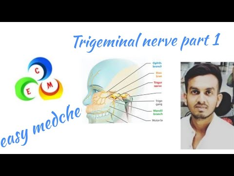 TrigeminalNerve #MaxillaryDivision #CranialNerve #Neuroanatomy like , comment , share , subscribe Wh.