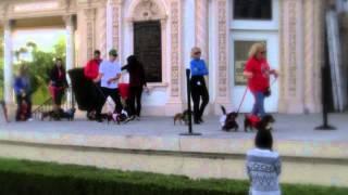 "San Diego Dachshunds at the ""Wiener Wonderland"" at Balboa Park"