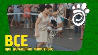 Все О Домашних Животных. Выставка Собак Международного Класса.
