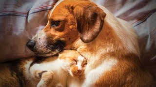 Cute Animals 🐶🐱 Funniest Cats And Dogs Moments (Full) [Funny Pets]