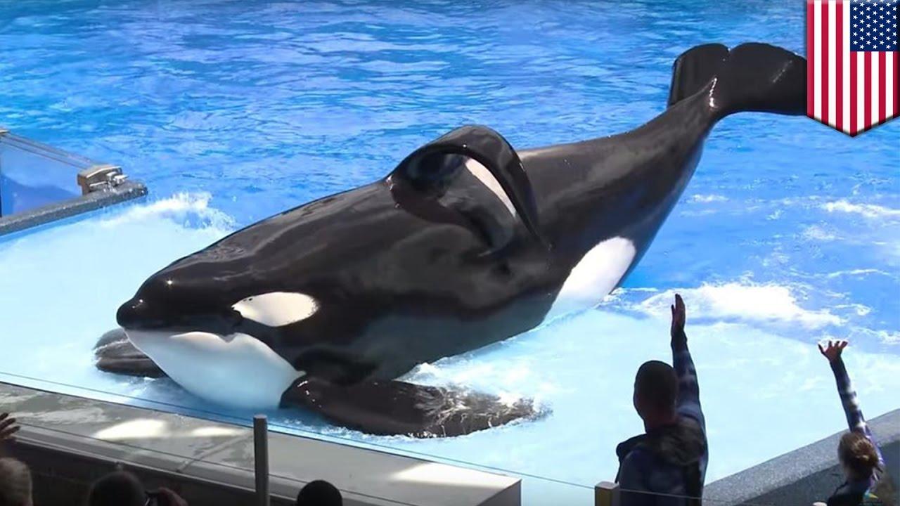วาฬชื่อดังที่สุดของโลก จากไปอย่างไม่มีวันกลับ Youtube