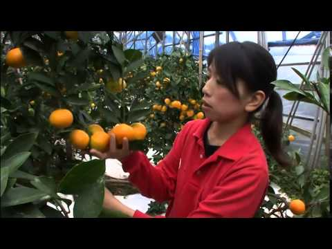 Exporting Japan's Agricultural Products to Overseas Markets