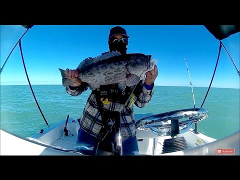 Clearwater Reef Fishing Gulf Of Mexico