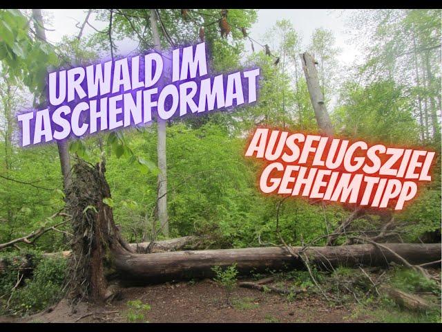 Urwald im Taschenformat - Ausflugsziel Geheimtipp!