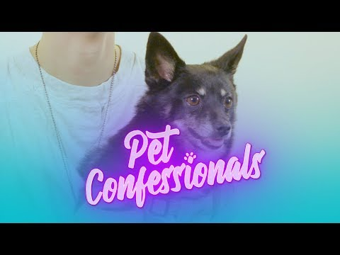 Pet Confessionals: PetCon Edition - PET BLING