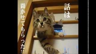 【2011年02月 深夜の馬鹿力】 伊集院光が、沖縄で激安の宿に泊まった時...