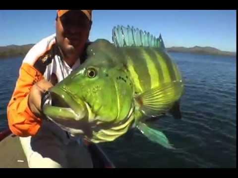 Criadero de peces pezcampero funnycat tv for Criar mojarras en casa