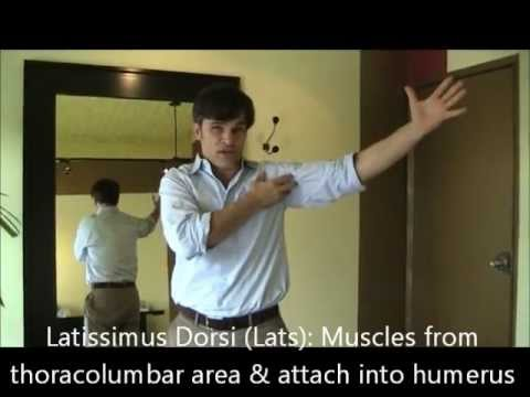 West Hollywood  Chiropractic: Lat Workouts and Stretches for Pain  Relief