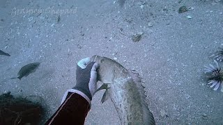 Saving a snagged hooked grouper while hunting Lionfish